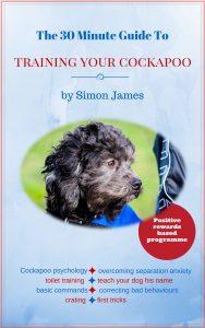 cockapoo training